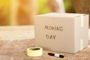moving day hire professionals dont move alone